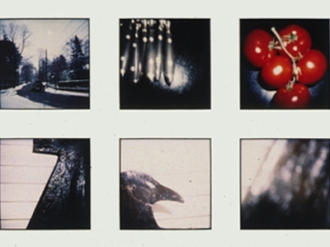 Grid of 16 Polaroids